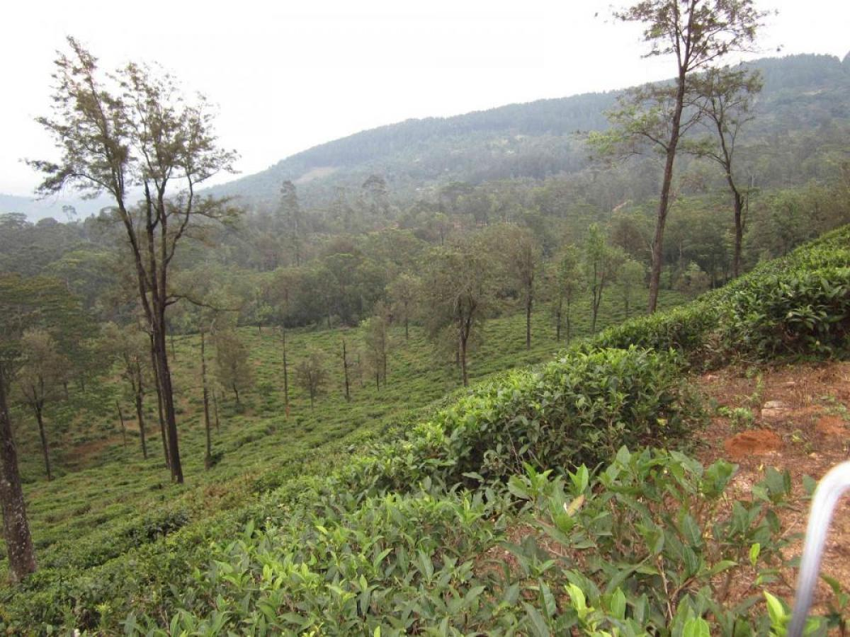 Property listed For Sale in Galaha, Sri Lanka