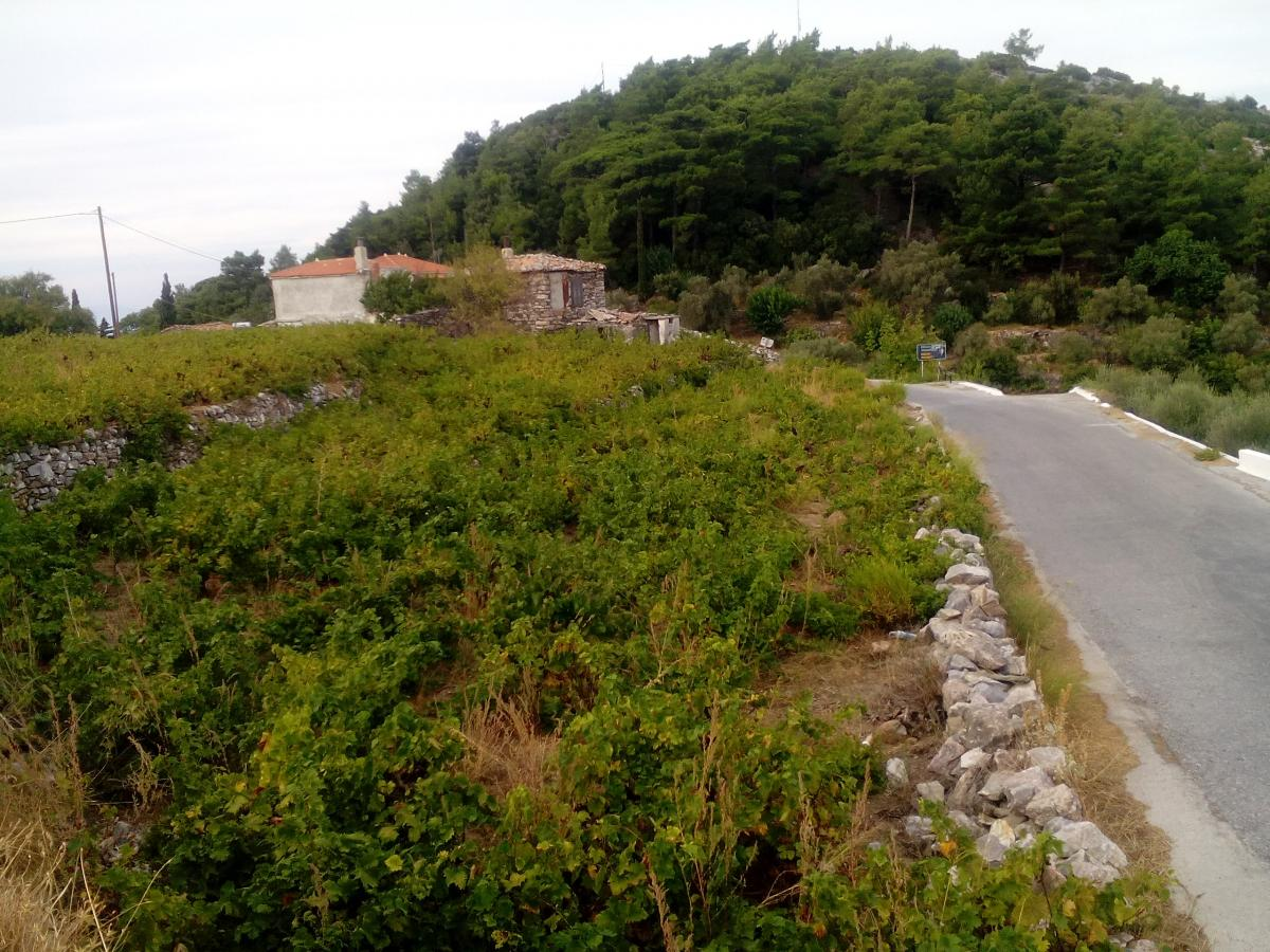 Property listed For Sale in Samos, Greece