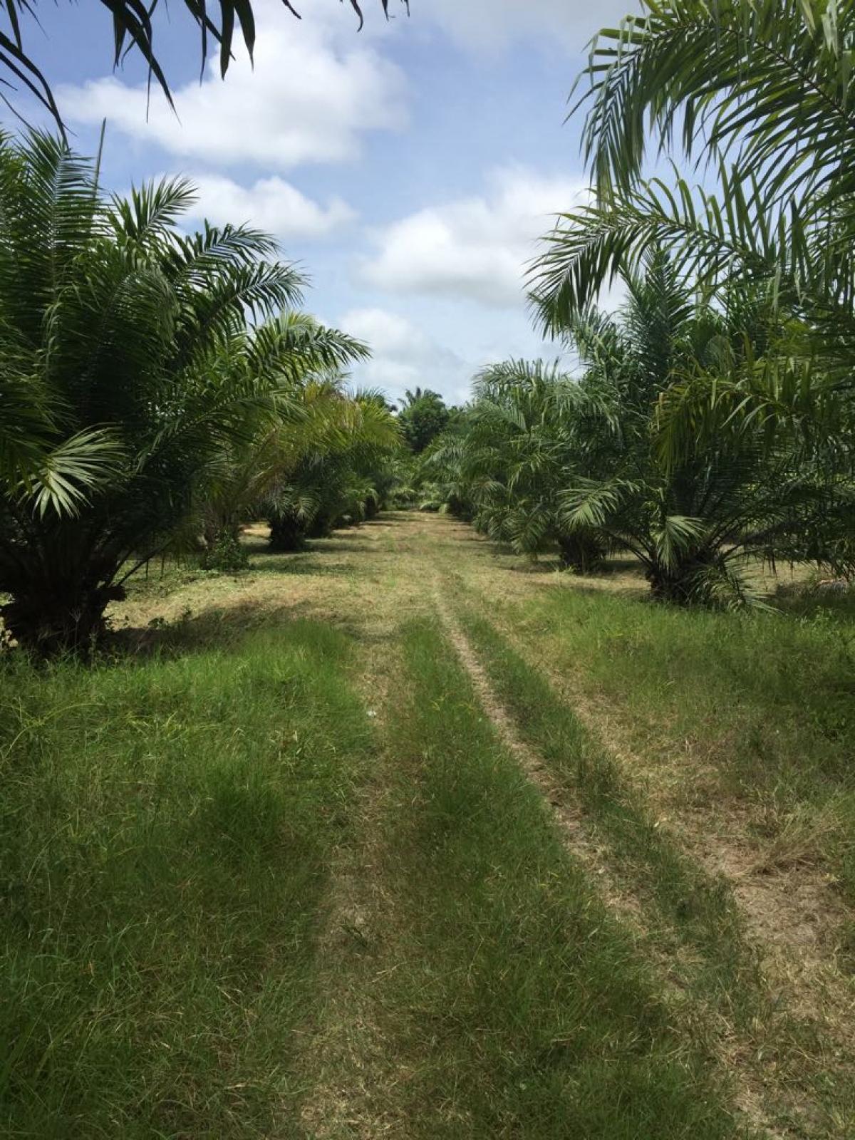 Picture of Farm For Sale in La Ceiba, Atlantida, Honduras
